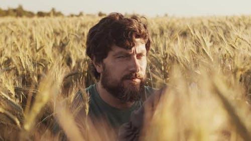 Farmer Examining Wheat Ears in Field