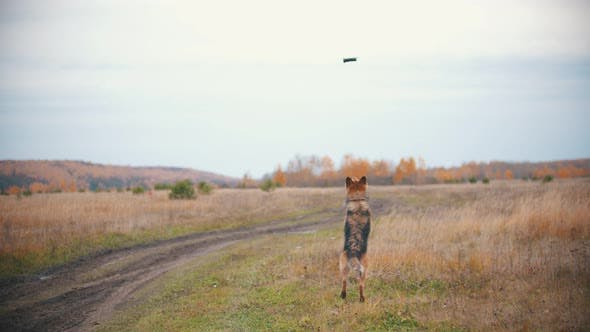 Thumbnail for A Dog Is Jumping and Trying To Catch the Copter