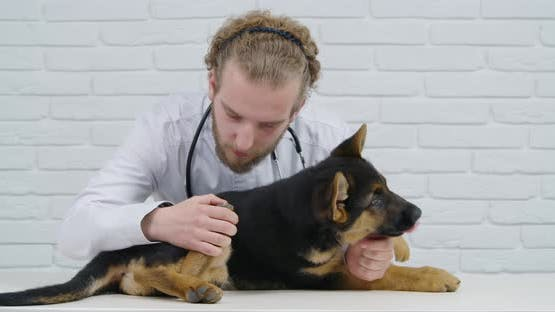 Vet Doctor Examining Health Condition of Little Puppy