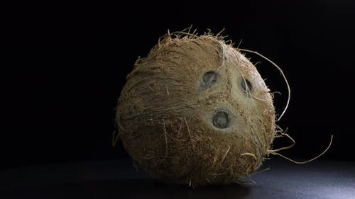 Typical Coconut