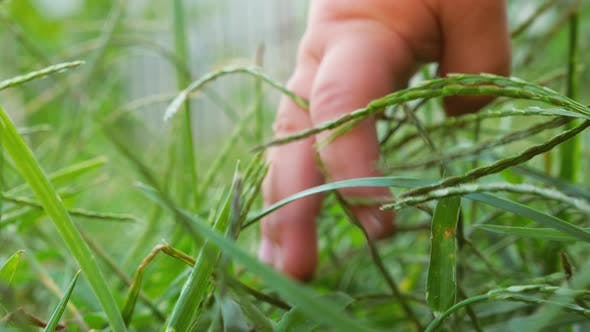 Thumbnail for Feeling the grass by the toddler. Curious concept. Baby touching green grass.Newborn baby outdoors.