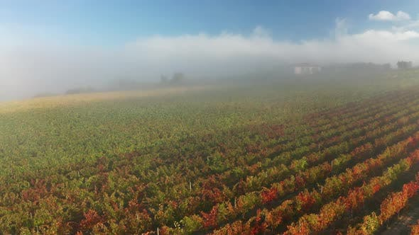 Thumbnail for Aerial View of a Rural Landscape During Sunrise in Tuscany. Rural Farm, Vineyards, Green Fields