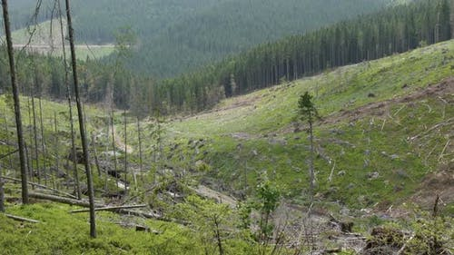 Felled Forest in the Mountains