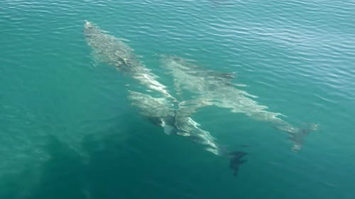 Dolphins swimming in front of a boat