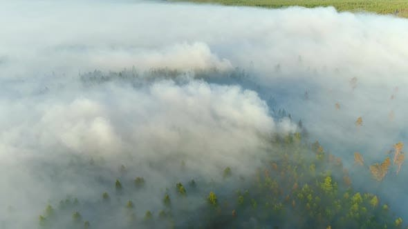 Thumbnail for Forest Burning Aerial