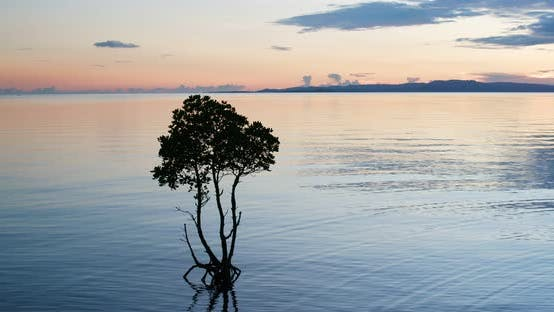Cover Image for Sunset with tree at the seascape