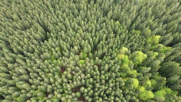 Thumbnail for Ukraine, Carpathians: Forest Landscape. Aerial View