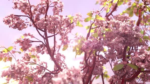 Thumbnail for Cherry Blossom Loop
