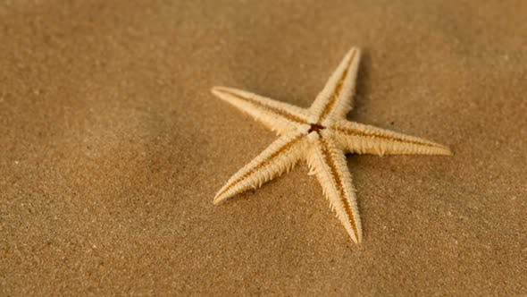 Thumbnail for Small Star on Sand, Rotation