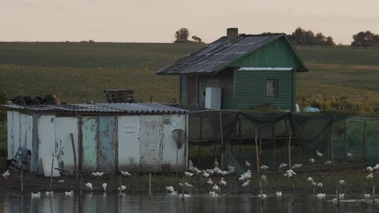 Thumbnail for House By The Lake. Lots Of Ducks