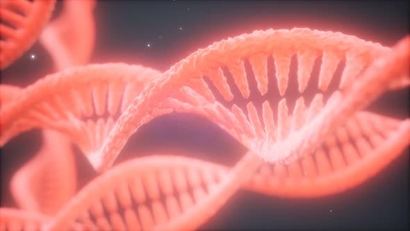 Structure of the DNA Double Helix