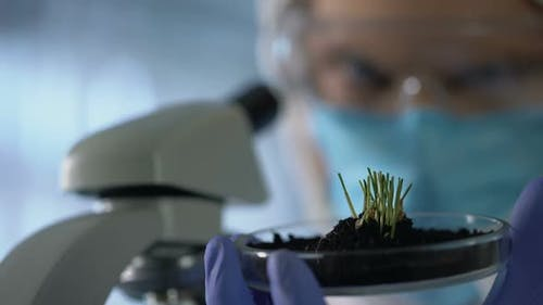 Biologist Observing Sprouts, Using Microscope to Check Growth, Agro Research