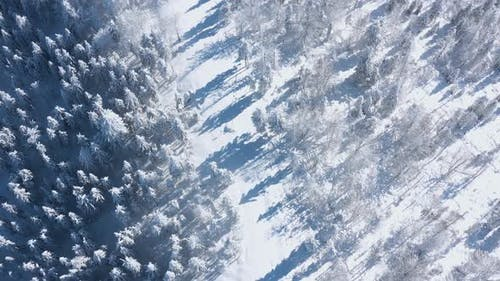 Top View of a Fabulous Winter Forest in Clear Sunny Day