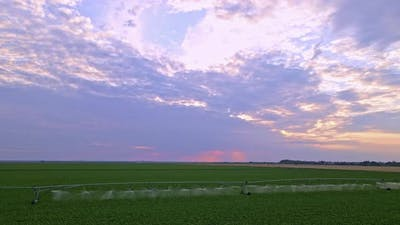 Sugar Beet Crops Field