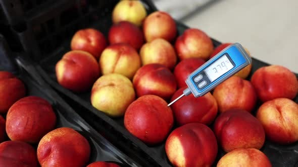 Thumbnail for Thermometer of the Peach fruit
