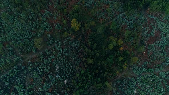 Thumbnail for Aerial View of Green Forest