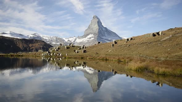 Thumbnail for Picturesque View of Matterhorn Cervino Peak and Blackneck Goats