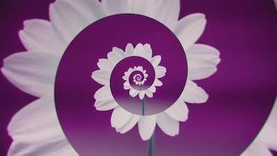 Swirling spiral of flower petals