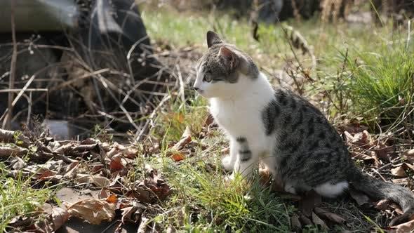 Thumbnail for Domestic Kätzchen ruht im Feld 4K 2160p 30fps UHD-Filmmaterial - Felis catus pet schleicht sich um in
