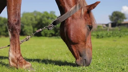 Horse Eating Grass on Green Meadow at Sunny Day