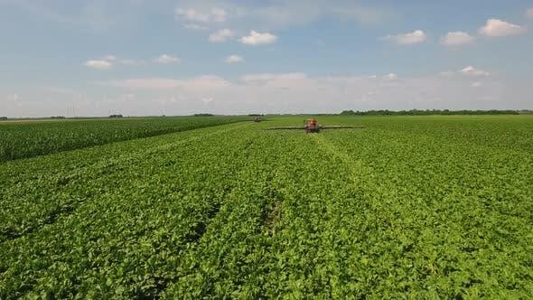 Tractors Spraying Herbicides On Sugar Beet Field