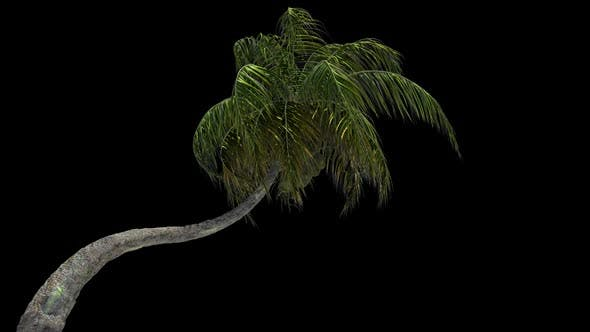 Thumbnail for Coconut Palm Tree In Storm