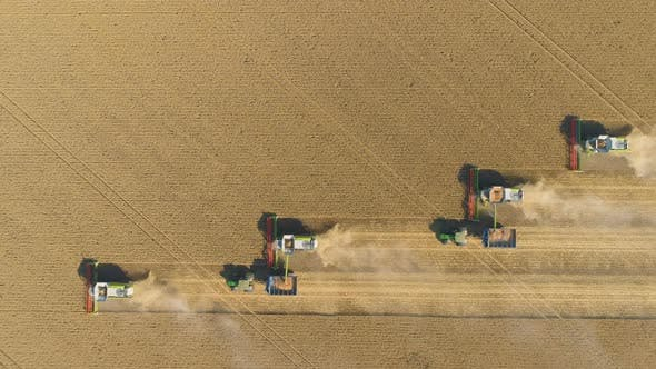 Combine Harvester Agriculture Machine Harvesting Golden Ripe Wheat Field. Agriculture. Aerial View