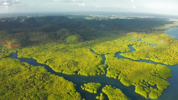 Thumbnail for Aerial Top View of Amazon Rainforest and River in Brazil