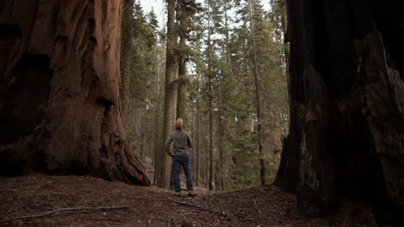 Exploring Giant Sequoias Forest