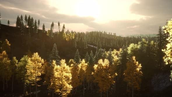 Forest Under Sunrise Sunbeams