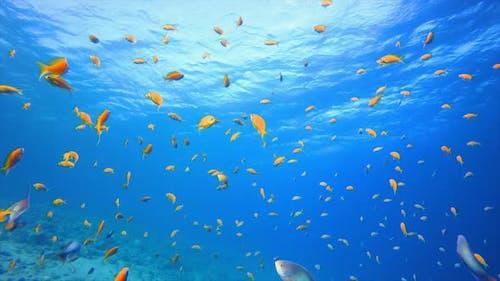 Underwater Fish Orange
