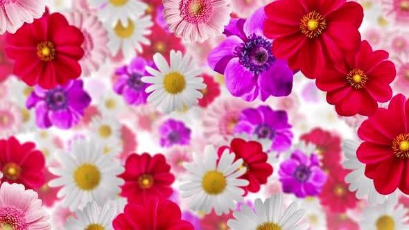 Thumbnail for Flower Background 4k