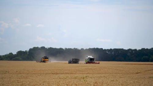Schwere Technik im Weizenfeld. Gelbe Mischung Ernte von trockenem Weizen. Prozess des Sammelns von trockenem Weizen.