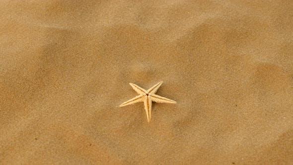 Thumbnail for Small Real Starfish on Sand, Rotation
