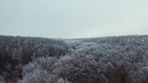 Thumbnail for Beautiful Forest in Winter