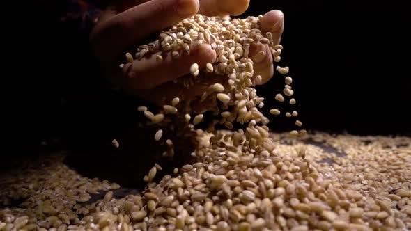 Thumbnail for Pearl Barley Spilling on Burlap