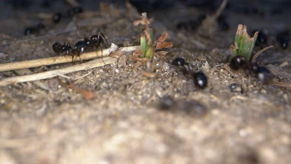 Animal Insects Ants On Soil 7