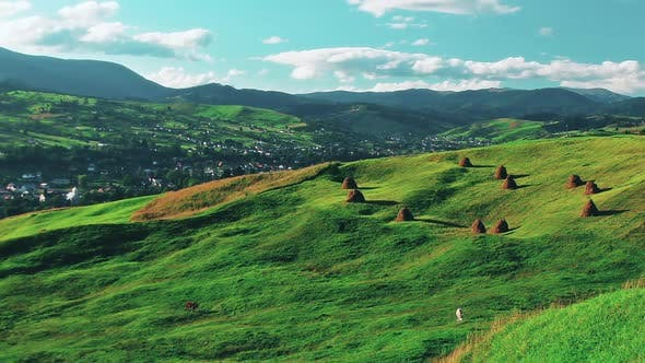 Thumbnail for mountain landscape. cows graze on a background of green meadows.