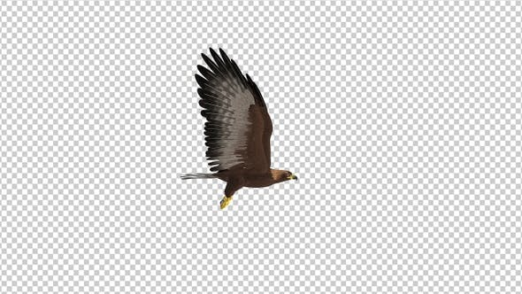Thumbnail for Golden Eagle - 4K Flying Loop - Side View