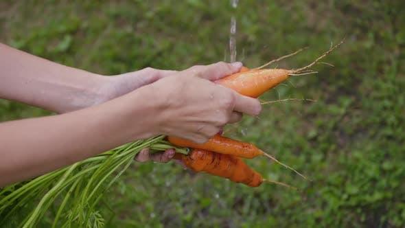 Women's Hands Wash Carrots in Clean Water