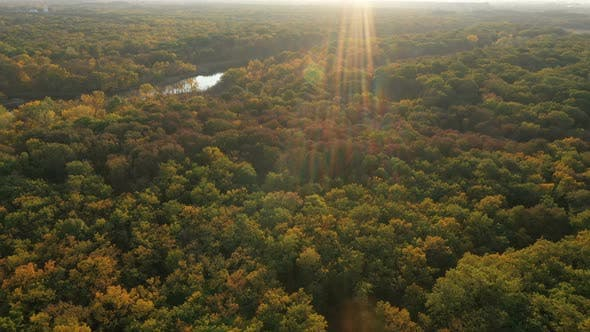 Thumbnail for Autumn Forest Aerial View 2