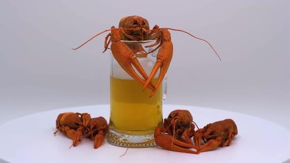 Beer with crayfish