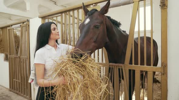 Thumbnail for Brunette Woman Feeding Horse with Hay.