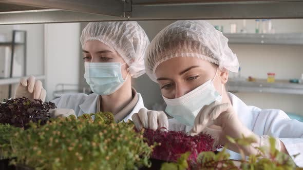 Thumbnail for Pair of Female Biologists Examining Young Plants
