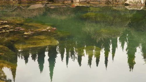 Reflection Of Cypress Trees In the Pond