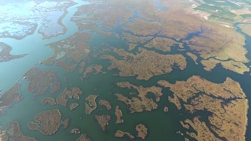 Aerial Delta Channels and Reeds