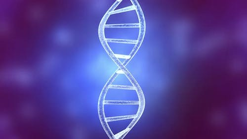 DNA Damage and dissolution Animation