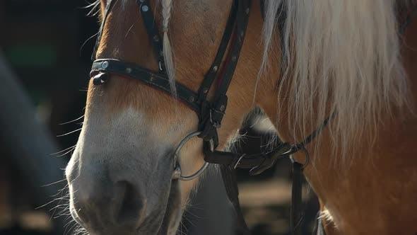Slow Motion Beautiful Horse Close Up