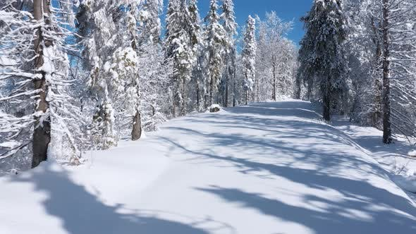 Flying Along the Path in Fabulous Winter Forest