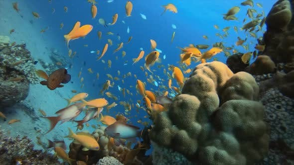 Cover Image for Underwater Fish and Coral Garden
